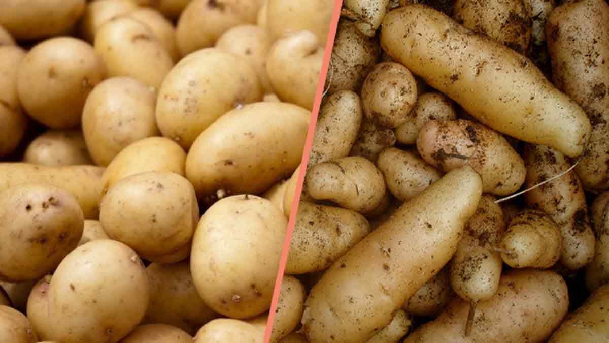 Alimentation : Comment cuire vos pomme de terre ? Astuces insolites !