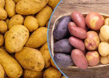Alimentation : Comment garder les pommes de terre et éviter le gaspillage ? Réponses !