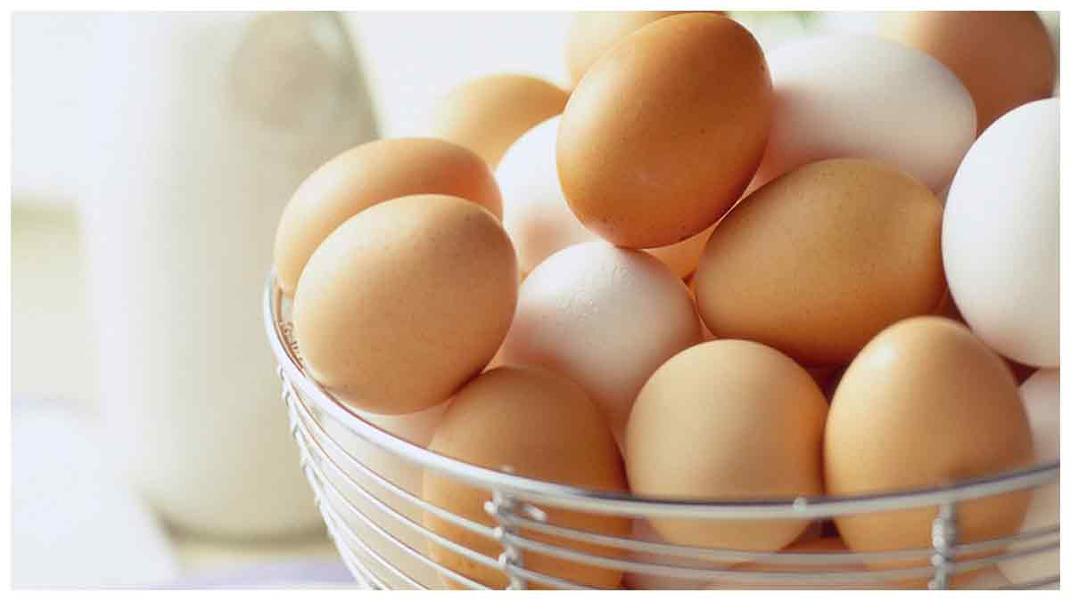 Alimentation : Quelle différence entre œuf brun et œuf clair ? On vous dit tout !
