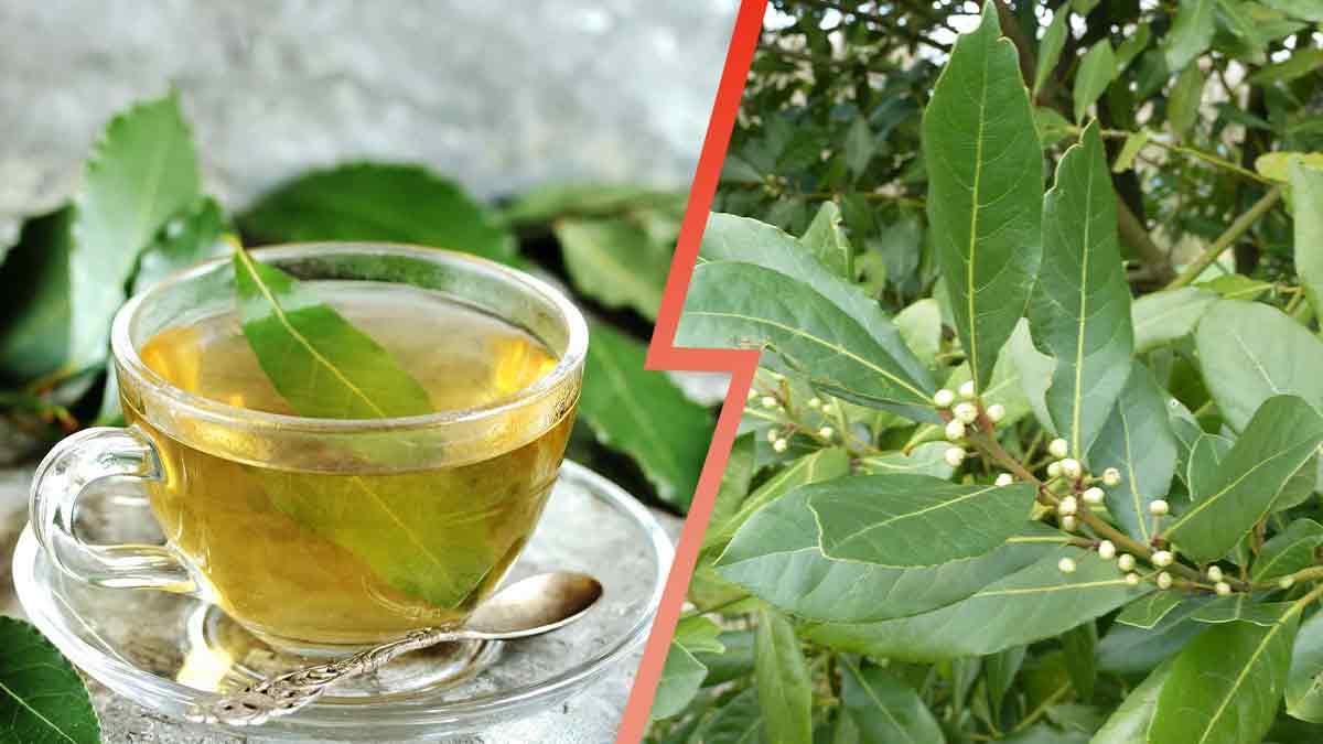 Infusion : quel thé pour quel effet ? On vous dit tout !
