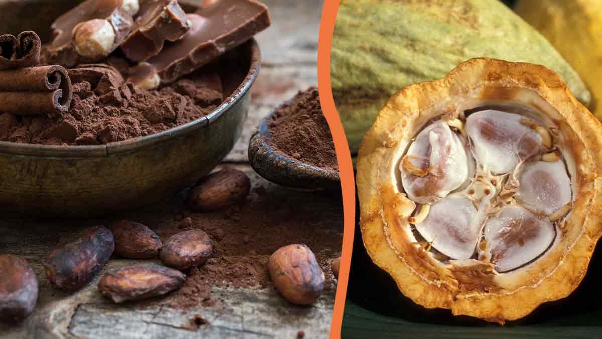 Le Cacao, votre allié santé ! Découvrez pourquoi !