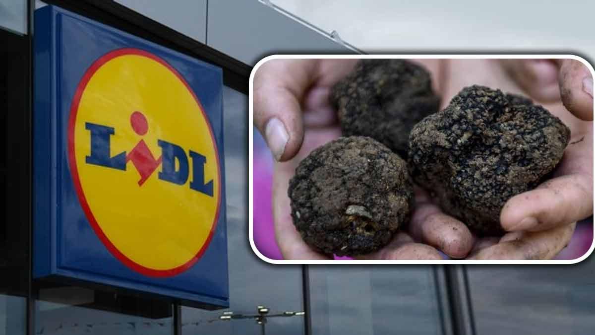 Lidl : Dénichez des truffes à petit prix pour votre menu de Noël ! C'est une BONNE affaire !